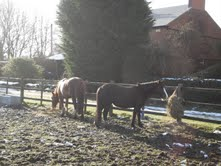 Horses on the way to Anne Hathaway's cottage.
